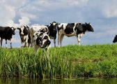 Dairy Farmer Covid